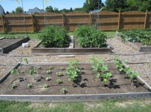 Garden Bed 2