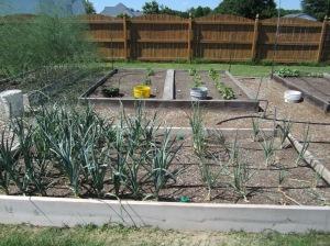Garden Bed 4