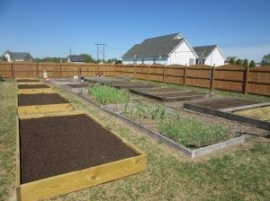 Garden Beds 4.12.15