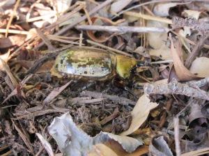 Bug 4