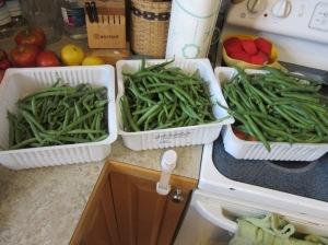 Green Beans July 2015