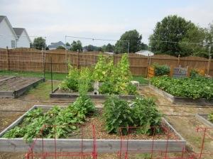 Turnips, Eggplant, Zucchini, Cucumbers